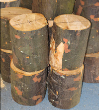 Queensland Kauri Logs to be prepped for the lathe. Heckathorn Tuned Wood Yarn Bowls.